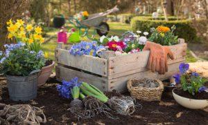 Richtige Gartenpflege im Frühjahr