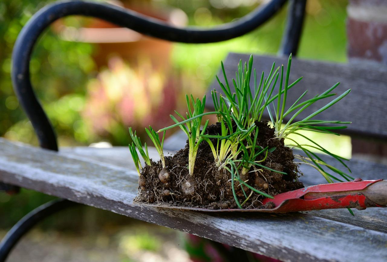 Blumenzwiebeln überwintern - perfekte Blütenpracht im nächsten Jahr