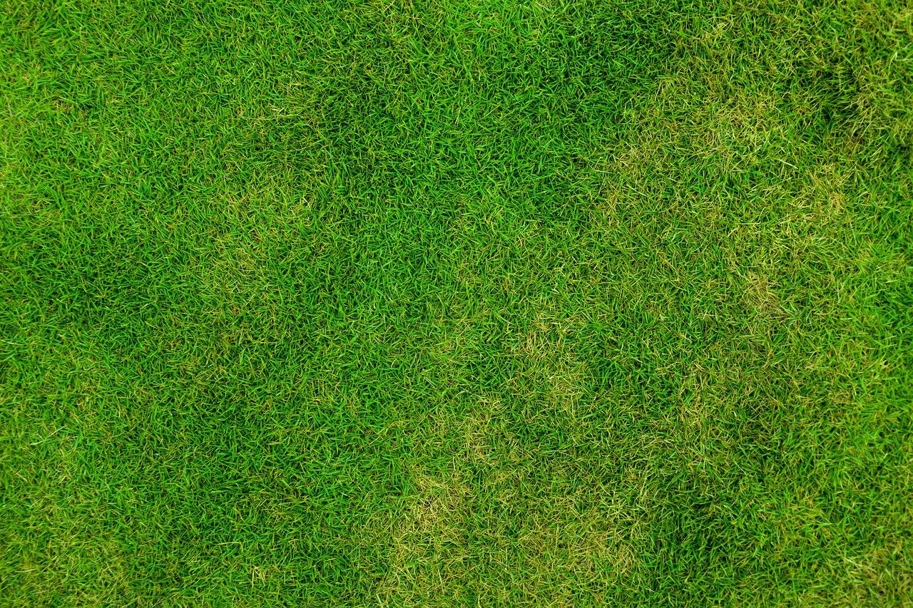Wie pflegt man den Rasen damit er immer schön und grün ist?